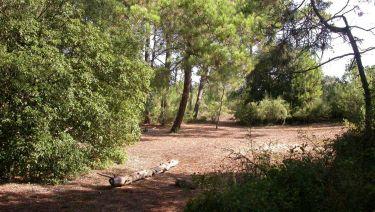 Forêt domaniale Trousse Chemise - Les Portes en Ré